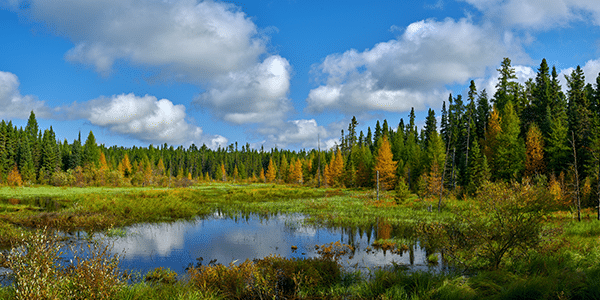 Small pond in Minnesota surrounded by trees   States with the best and worst credit scores